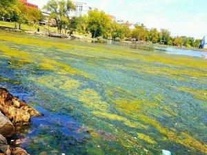 oronoca-algae