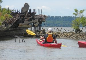 Most of the shipwrecks in Mallows Bay are from World War I.