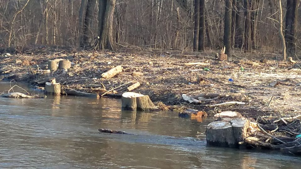 Stop Trump's Clear Cutting of Trees Along the Potomac River
