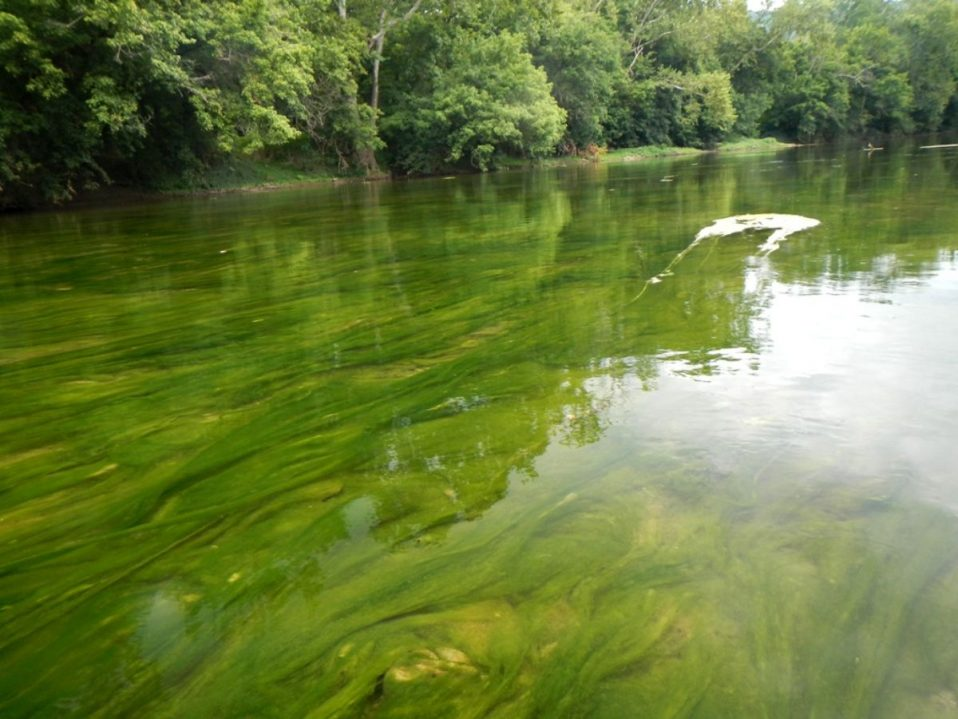 2017 Algal Outbreak, Deer Rapids, Strasburg VA