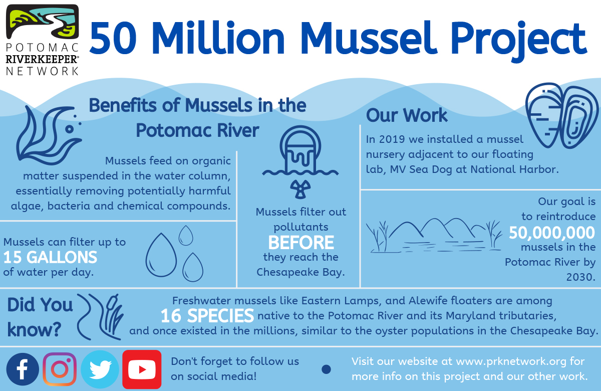 Potomac Riverkeeper Network - 50 Million Mussel Project